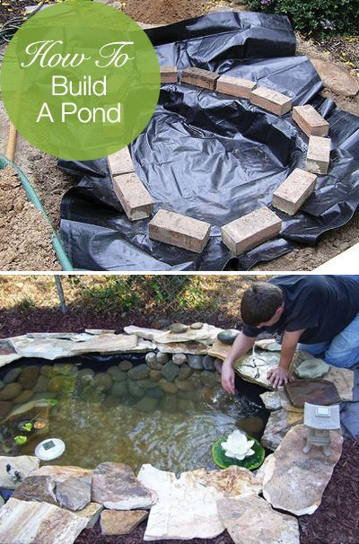 Backyard-Pond-11