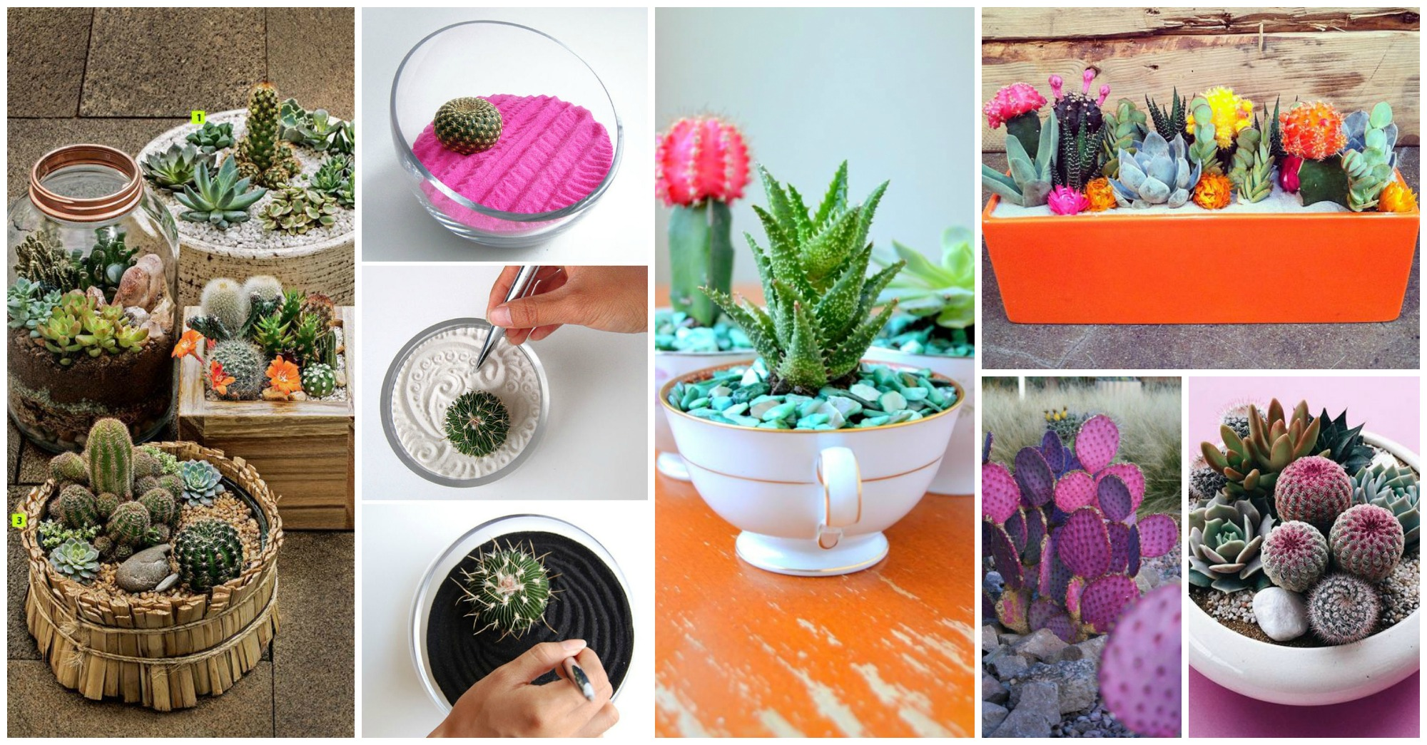 15 Awesome Mini Cactus Gardens