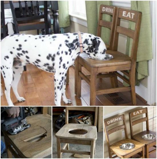 Dog Feeding Station3