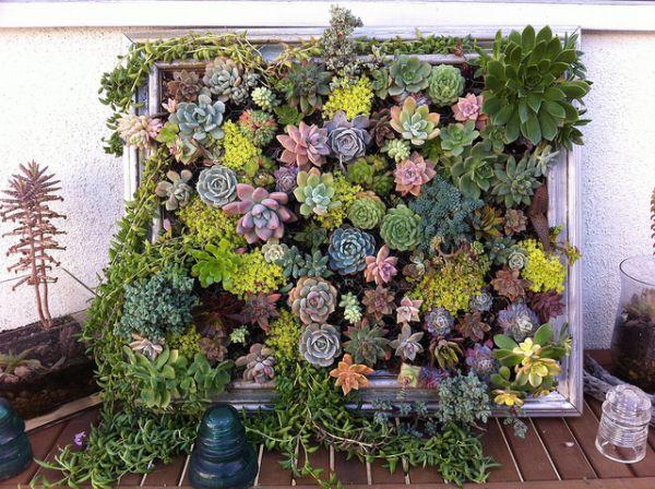 Hanging succulent DIY garden from vintage frame