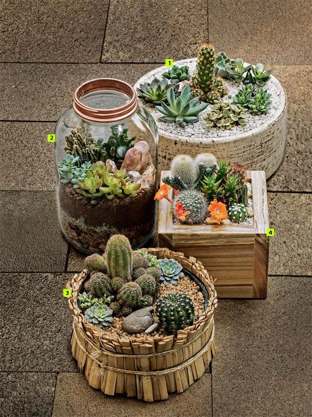 Mini-Cactus-Gardens-1