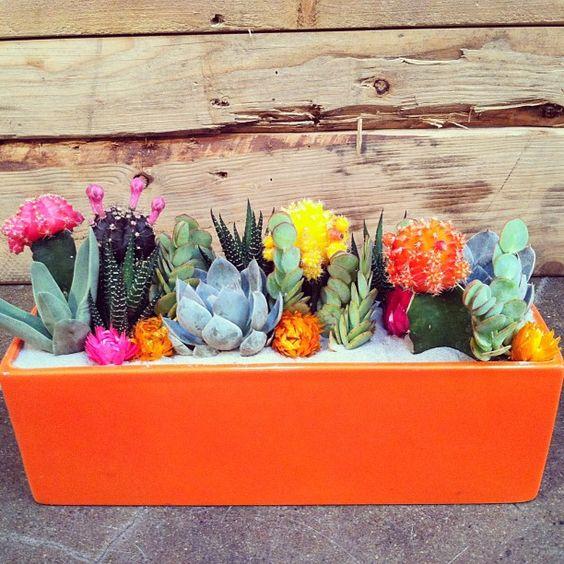 Mini-Cactus-Gardens-10