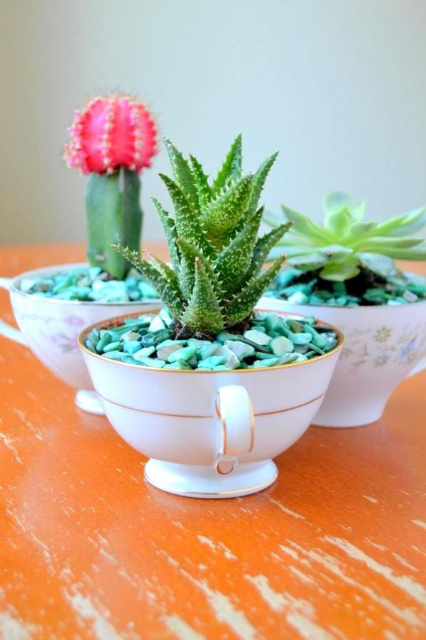 Mini-Cactus-Gardens-12