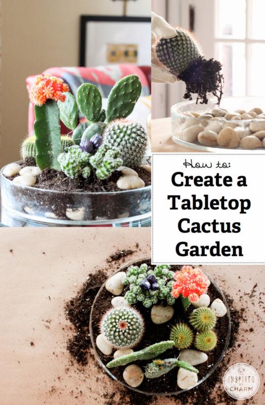 Mini-Cactus-Gardens-13
