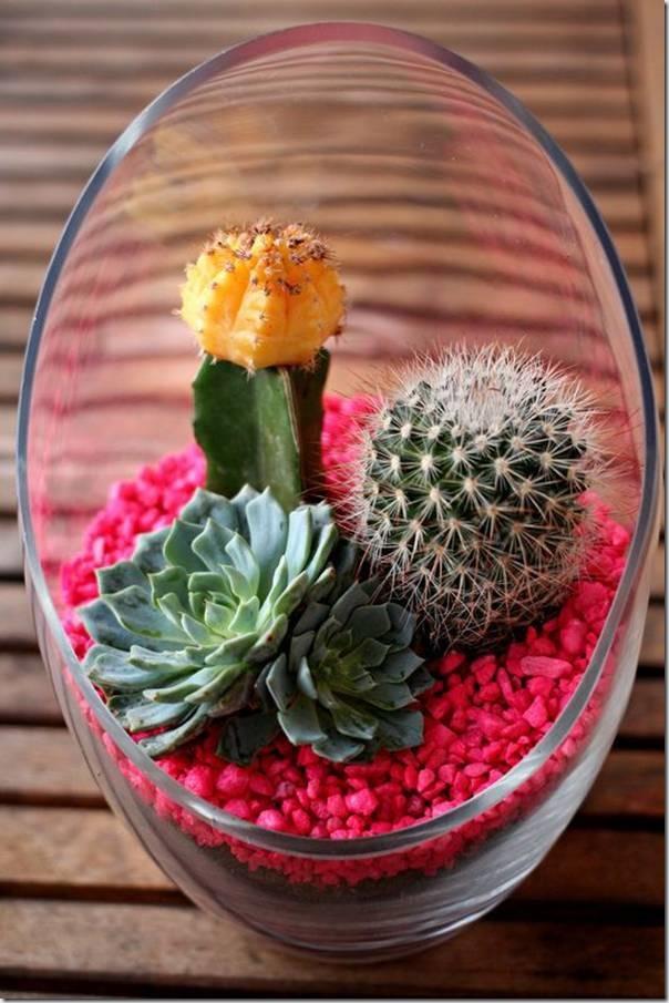 Mini-Cactus-Gardens-18