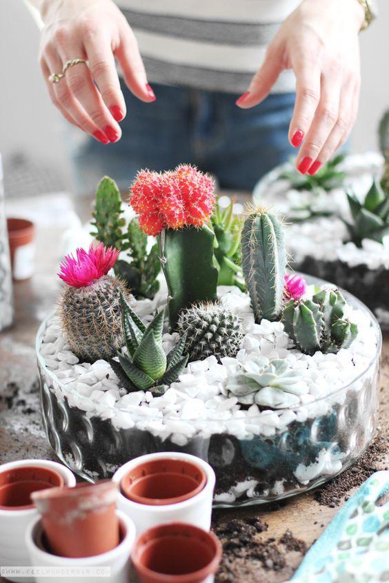Mini-Cactus-Gardens-19