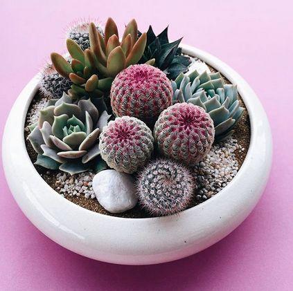 Mini-Cactus-Gardens-3