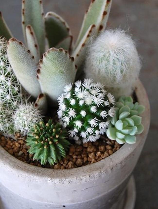 Mini-Cactus-Gardens-4
