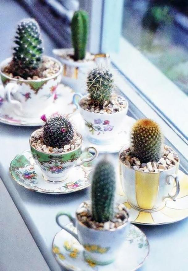 15+ Awesome Mini Cactus Gardens