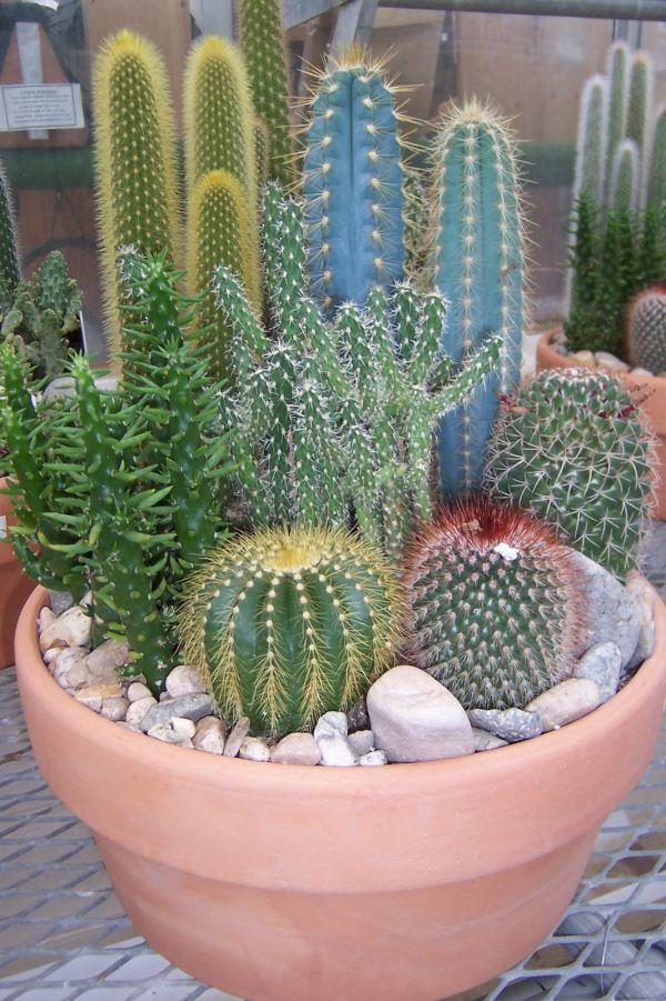 Mini-Cactus-Gardens-6