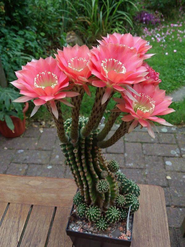 Mini-Cactus-Gardens-9