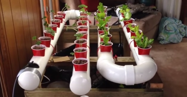 PVC Gardening Ideas and Projects PVC Aquaponic Garden
