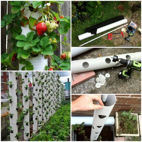 PVC Gardening Ideas and Projects PVC Strawberry Tube Planter