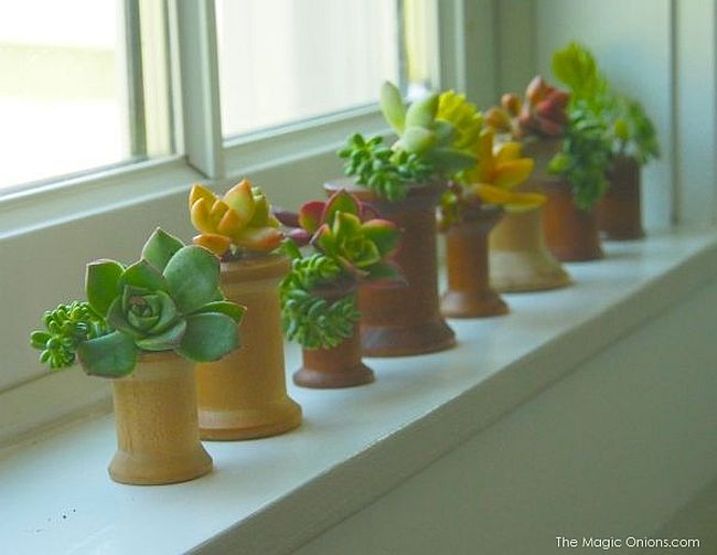 Small and stylish DIY indoor planters