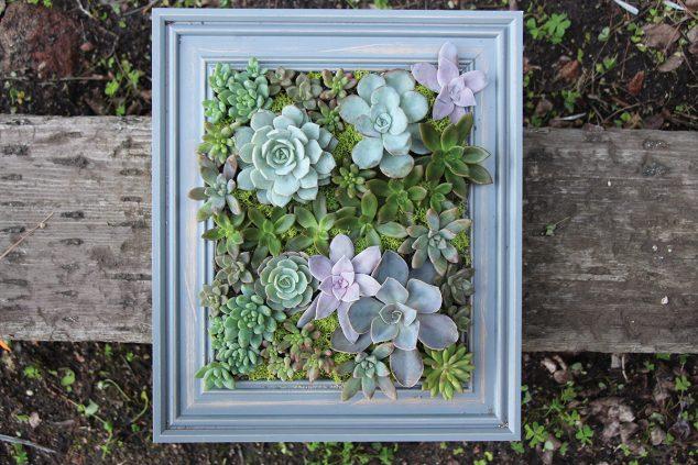 Succulent-Frame-11