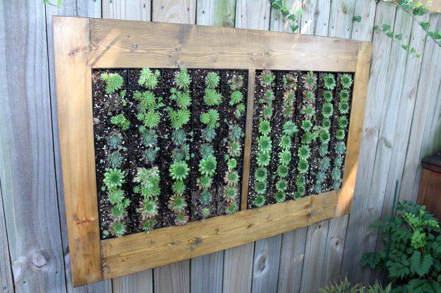 Succulent-Frame-2