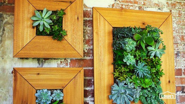 Succulent-Frame-3