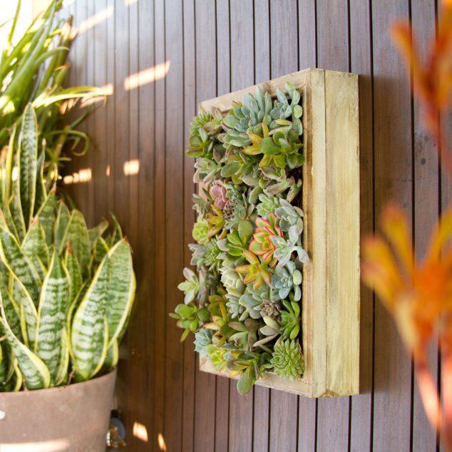 Succulent-Frame-4