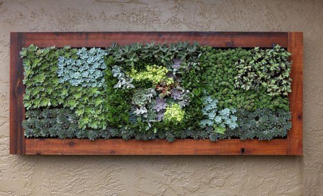 Succulent-Frame-5