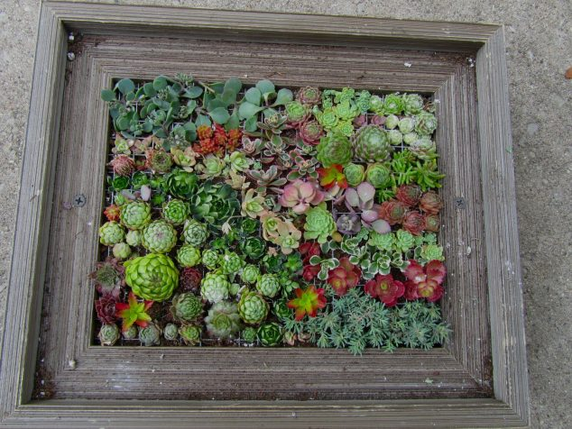 Succulent-Frame-6