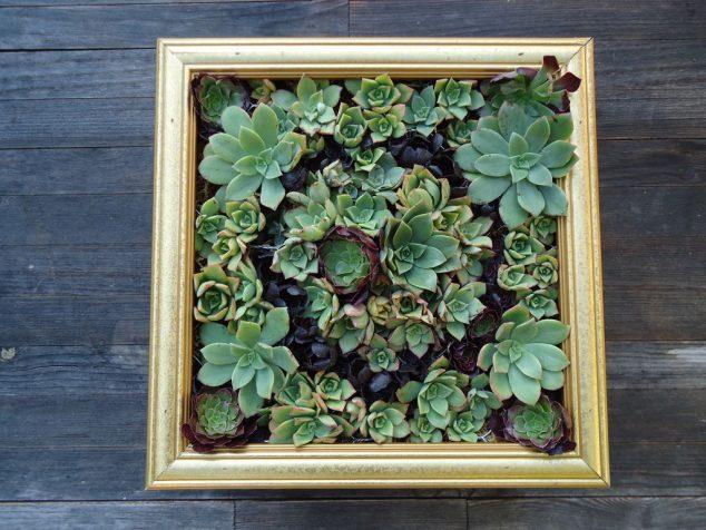 Succulent-Frame-8