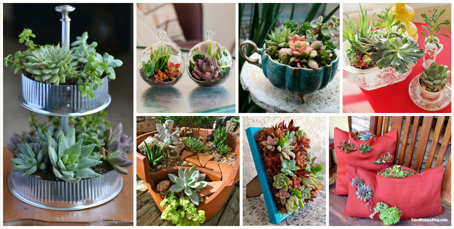 15 Awesome Succulent Garden Ideas