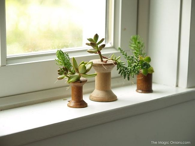 DIY Indoor Gardening Ideas
