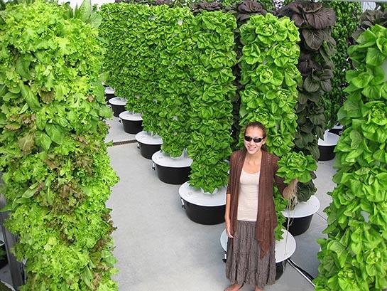 Vertical Vegetable Garden 10