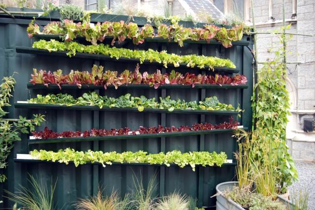 Vertical Vegetable Garden 15