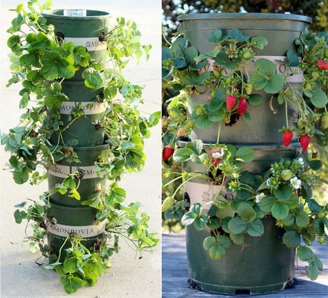 Vertical Vegetable Garden 17