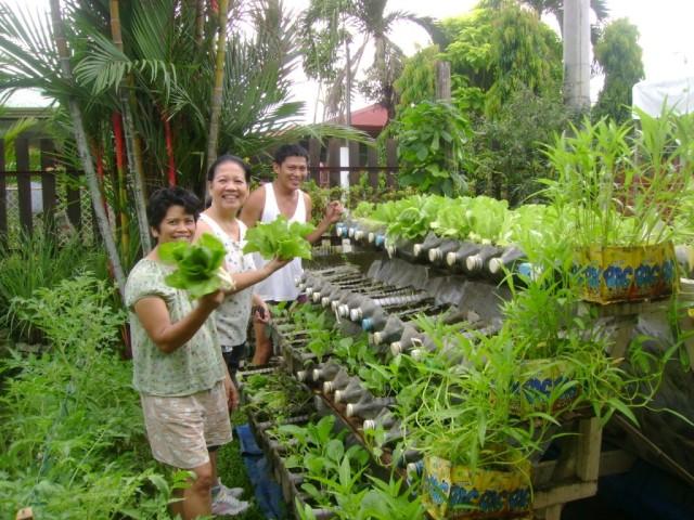 Vertical Vegetable Garden 18