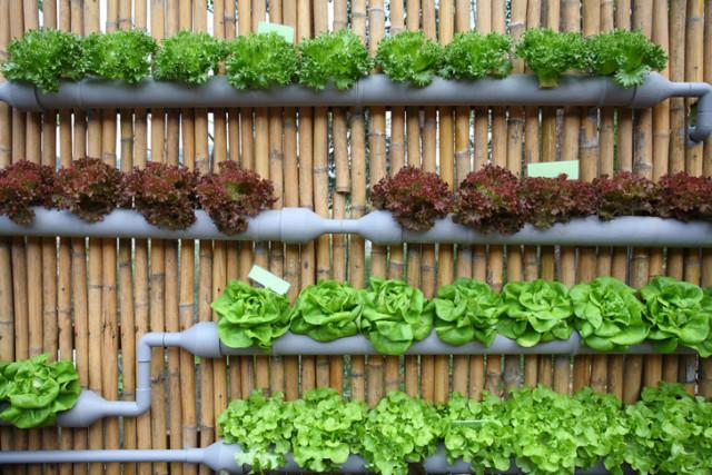 Vertical Vegetable Garden 2