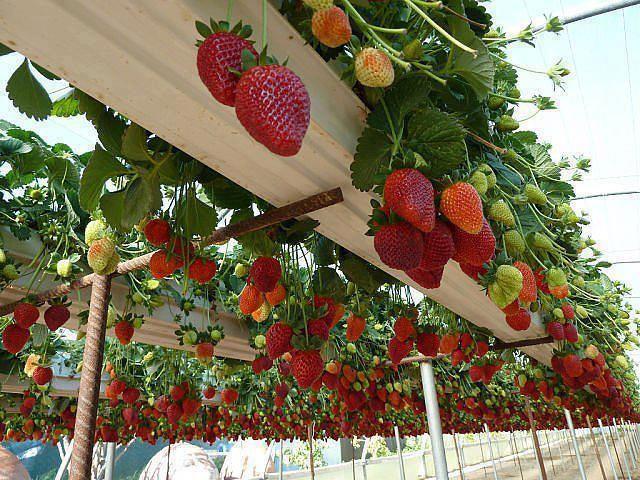 Vertical Vegetable Garden 22