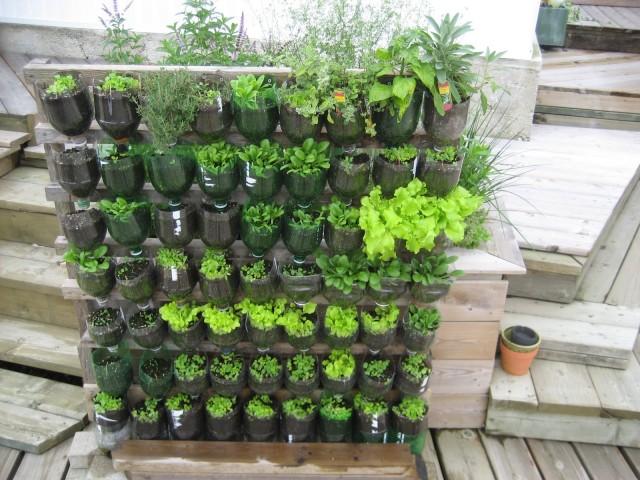 Vertical Vegetable Garden 3