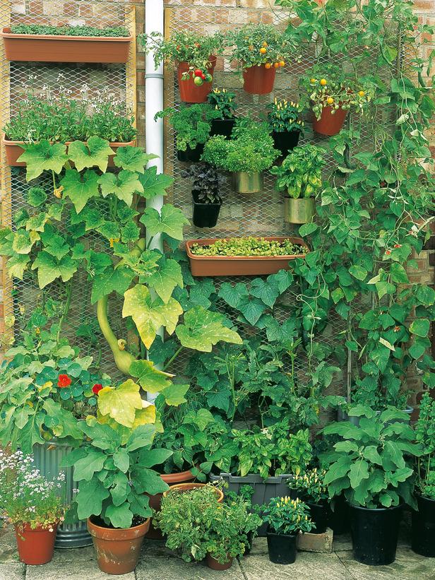 Vertical Vegetable Garden 4