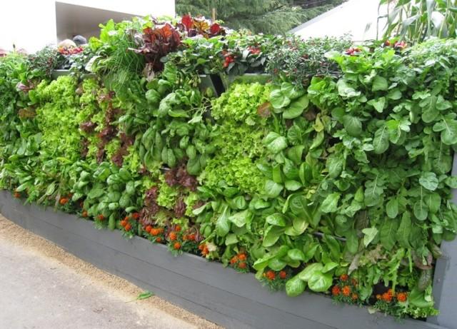 Vertical Vegetable Garden 5