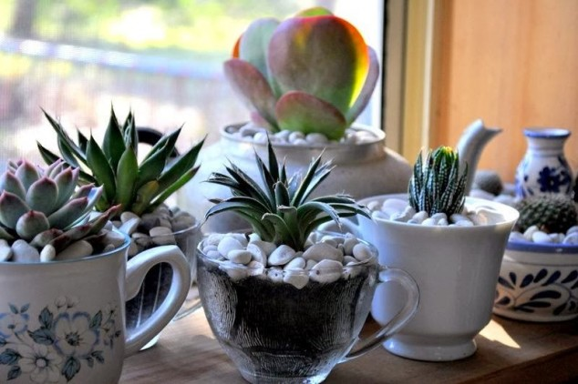 10+ Creative DIY Ideas To Grow Plants At Home