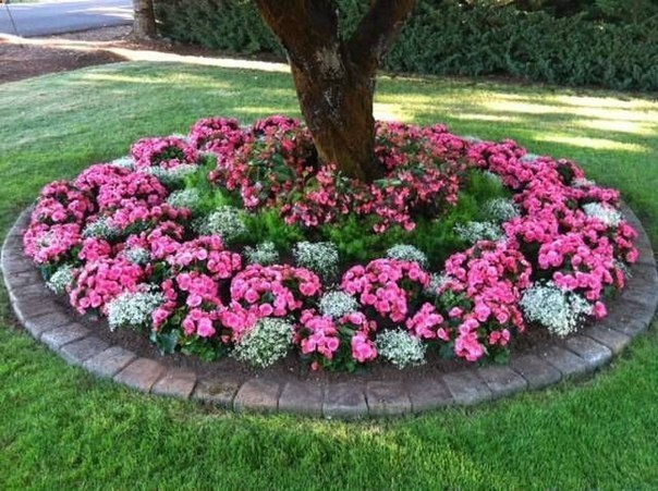flower beds around tree 2