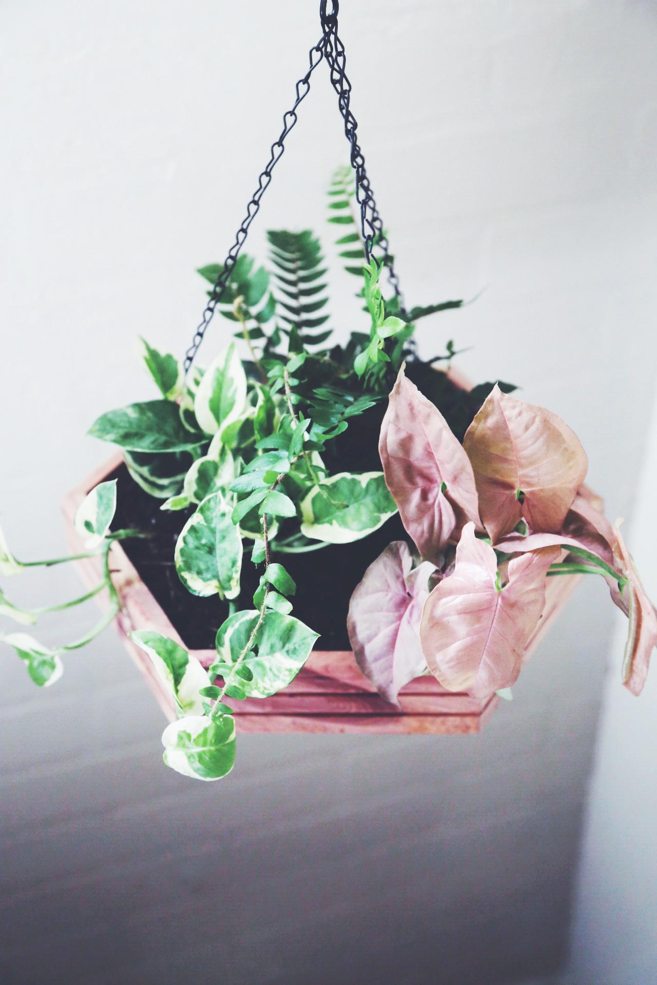 hanging planters 11