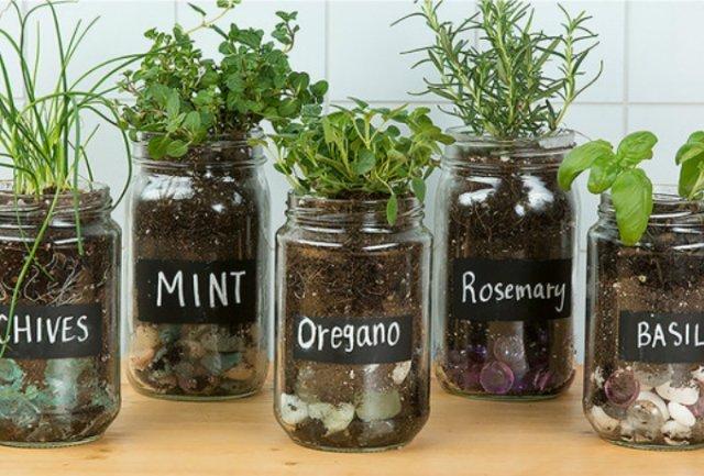 indoor herb gardens 2