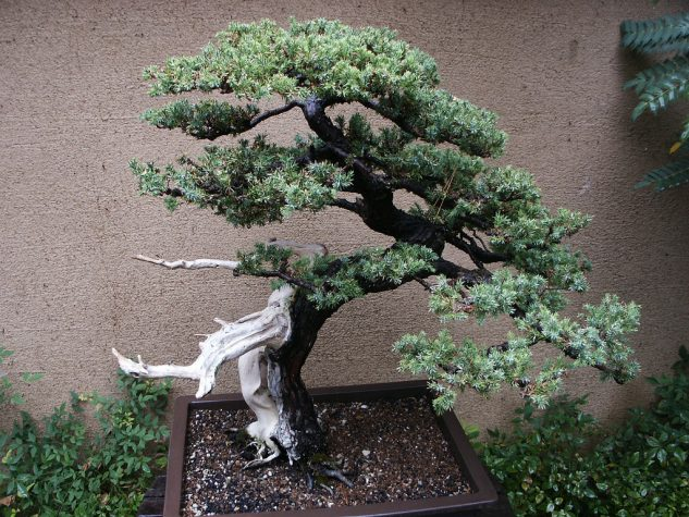 10+ Impressive Japanese Garden With Bonsai Tree