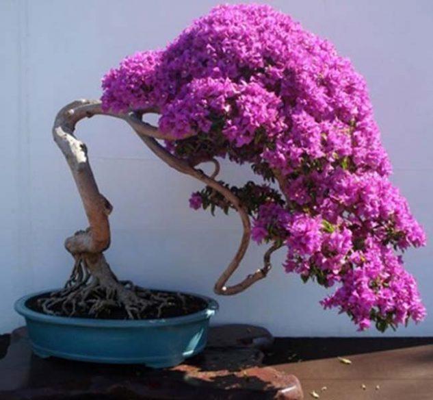 japanese-garden-bonsai-tree-10