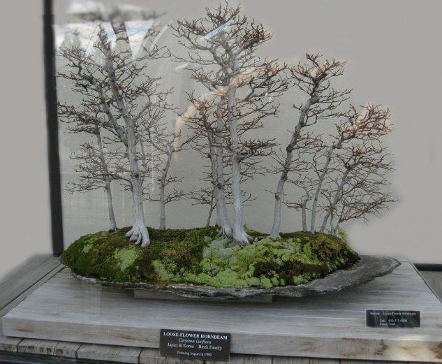 japanese-garden-bonsai-tree-11