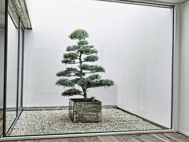 japanese-garden-bonsai-tree-12