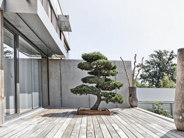 japanese-garden-bonsai-tree-6