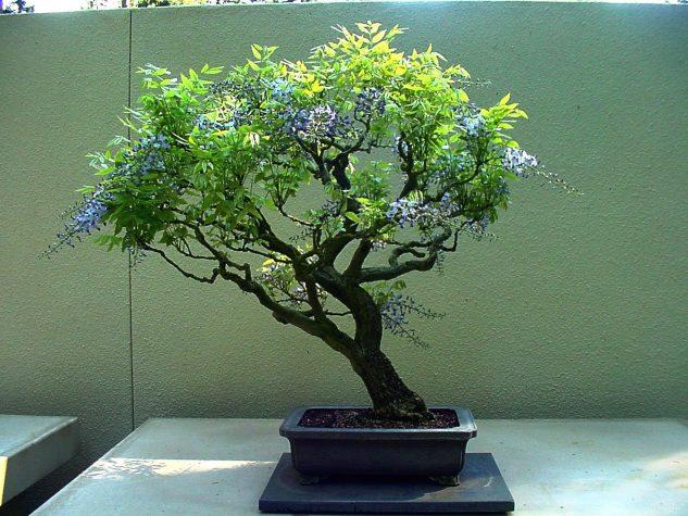 japanese-garden-bonsai-tree-8