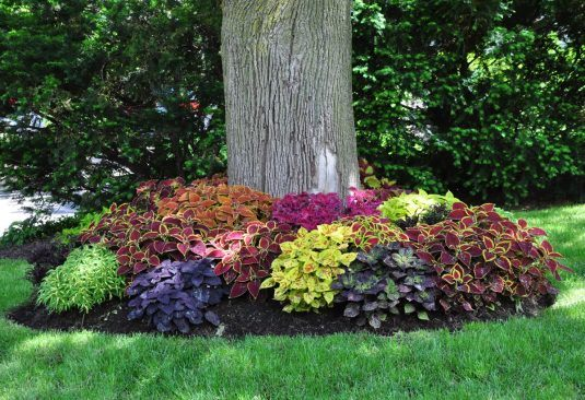 15+ Beautiful Ideas For Decorating The Landscape Around The Trees