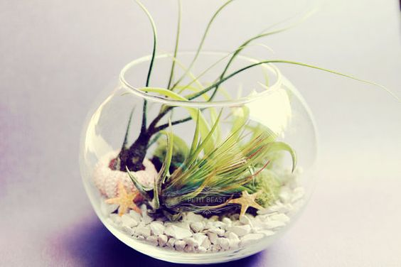 lovely-terrarium-ideas-18