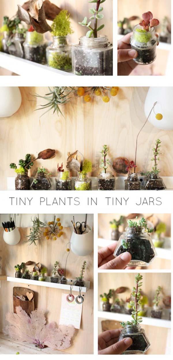 mini garden indoor 24
