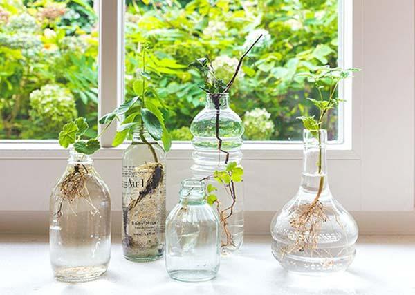 mini garden indoor 3